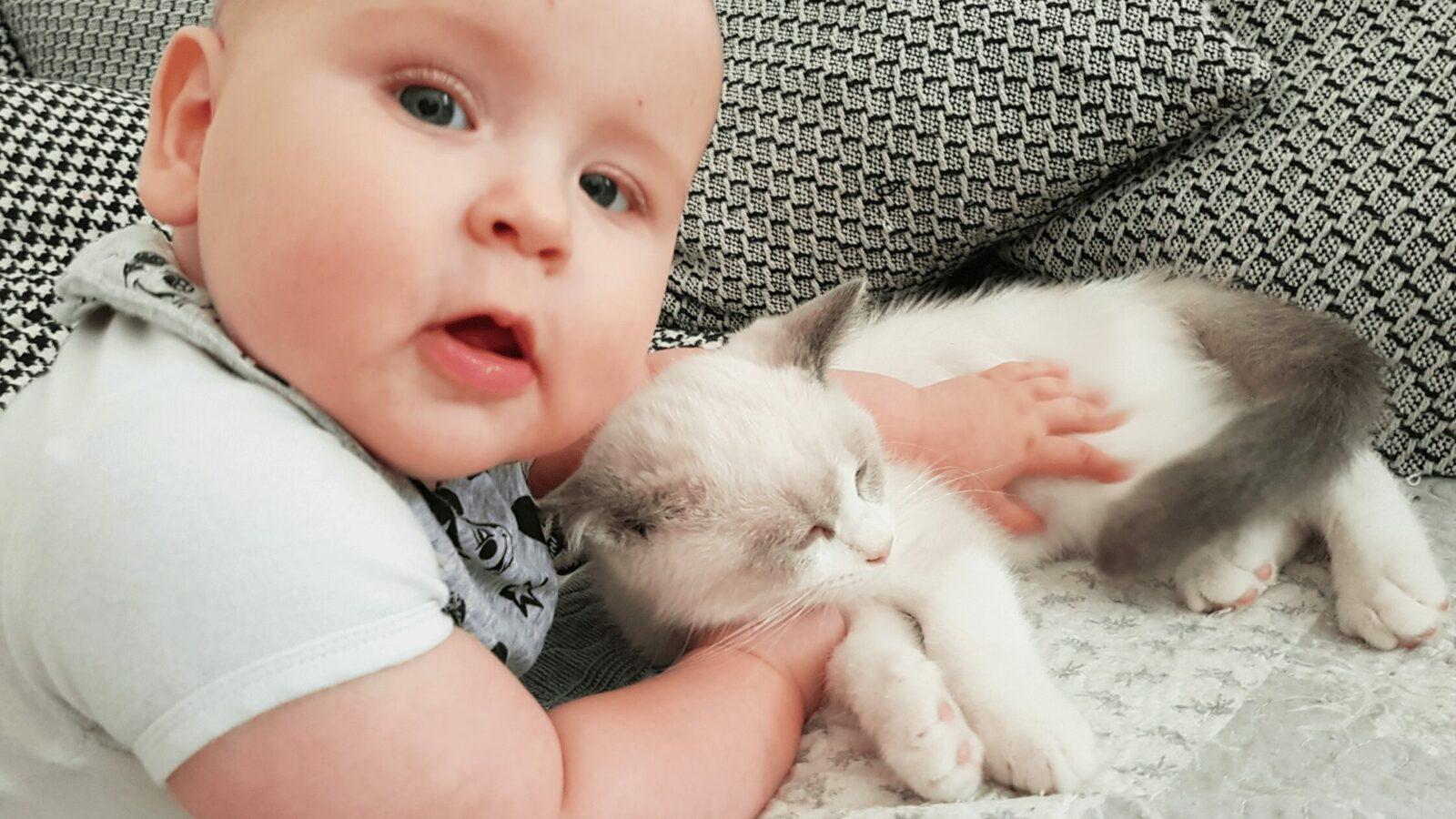 Huisdieren En Kinderen   Waarom Dit Een Goede Keus Is.