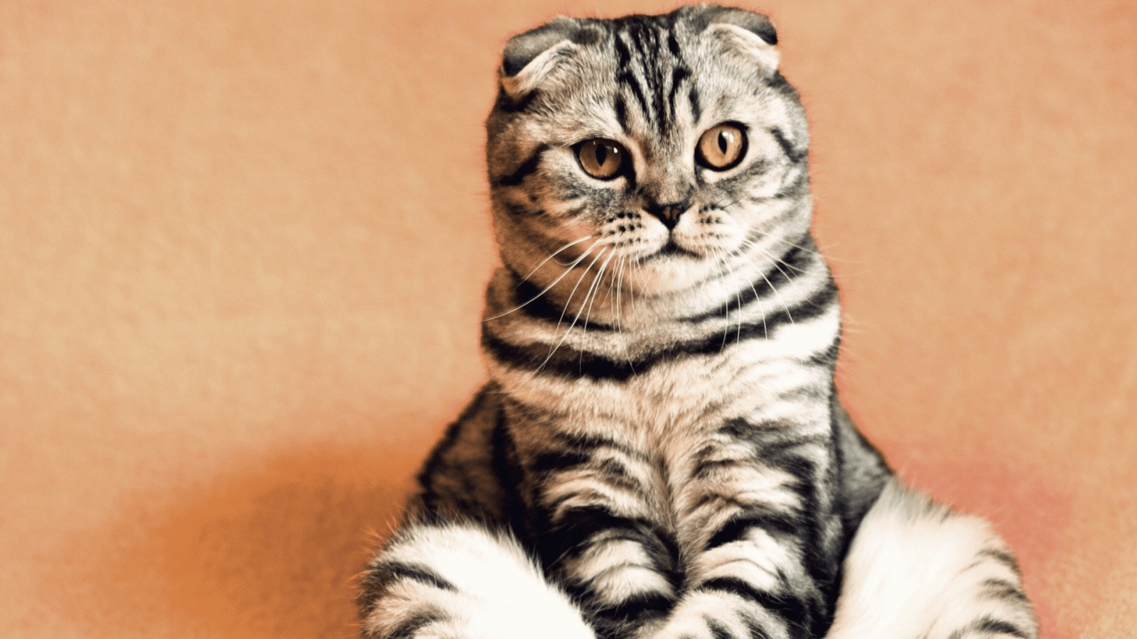 Huishouden met dieren    7 tips voor dierenharen in huis