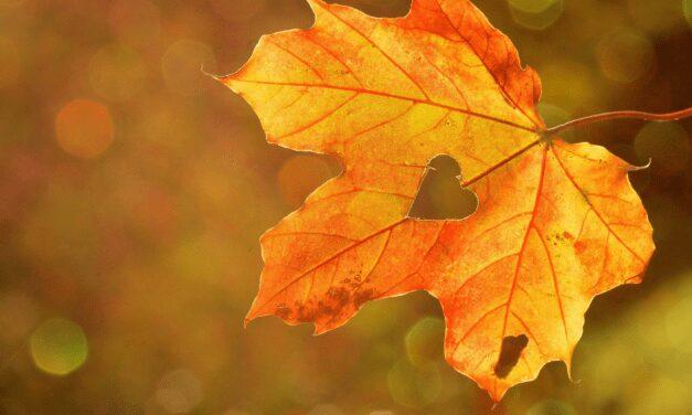 7x  Dit Vind Ik Nou Echt Leuk Aan De Herfst!